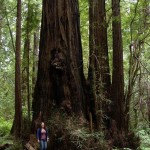 Jenny Binstock from Greenpeace enjoying some Redwood majesty along the Avenue of the Giants, Humboldt Redwoods State Park.