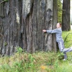 Gina Merchant can't resist a Coast Redwood along the road to Eureka.