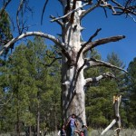 Kristen Francis and her family hug a giant Jeffrey pine snag at Laguna Hanson, Baja California.