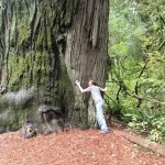 Tyler Hauser warms up to a Coast Redwood at Del Norte Redwoods State Park.