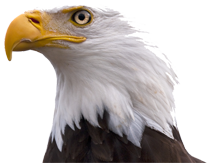 bald eagle render by - photo #30